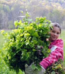 girl-collecting-plants